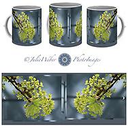 Coffee Mug Showcase 13 - Shop here:  https://2-julie-weber.pixels.com/featured/maple-tree-flowers-2-julie-weber.html