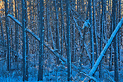 Trees covered in snow at sunset<br />