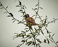 African Gray Hornbill. Chobe River, Botswana. Image taken with a Nikon 1 V3 camera and  70-300 mm VR lens.