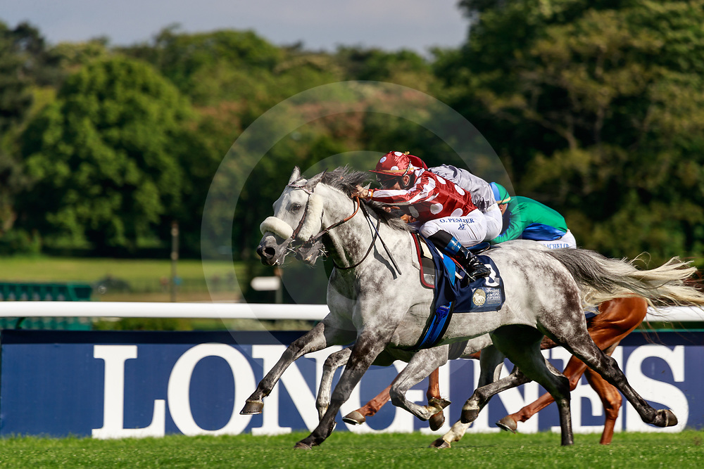 Tayf (O. Peslier) wins The President Of The UAE Cup Coupe d'Europe des Chevaux Arabes Gr 1 PA in ParisLongchamp, France, 12/05/2019, photo: Zuzanna Lupa