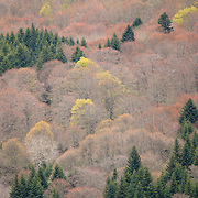 Trees with pastel colors,  Col de Guéry, Forêt Domaniale de Guéry, Massif d Sancy, Auvergne, France