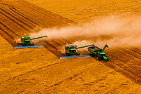 A combine harvester unloads it's grain to a grain wagon pulled by a tractor (Machine Sync uses GPS signals and automation technology to synchronize the combine and tractor pulling the grain wagon)<br /> while in motion during the wheat harvest, Schields & Sons Farming, Goodland, Kansas USA.