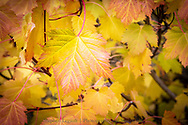 Autumn Colours, Castle Wildland, Alberta