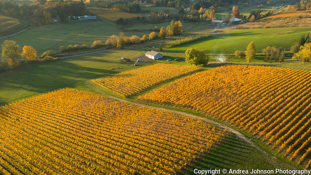 Fall brilliance, Arilyn Vineyards, Willamette Valley, Oregon