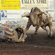 A bull at  a rodeo in Montana.