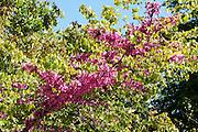 blooming garden flower Photographed in Madrid Botanical Gardens