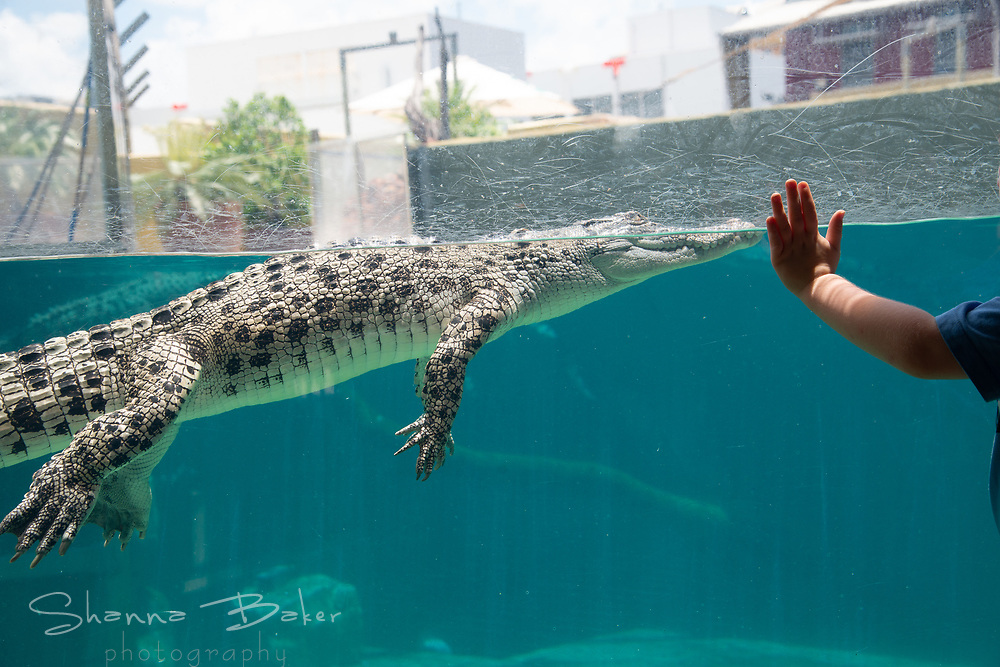 Shot on assignment for a Hakai Magazine feature article about what it's like to live alongside saltwater crocodiles in the Northern Territory of Australia. https://www.hakaimagazine.com/features/crocodiles-rising/