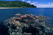 reef corals exposed at low tide, Epi Island, Vanuatu, formerly known as New Hebrides, South Pacific