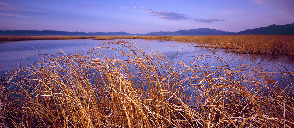 Reeds and Lake at Sunrise, Ruby Lake National Wildlife Refuge, Nevada