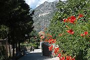 Montenegro, Kotor,
