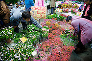 The Jianguo Flower Market (??????) in Taipei, Taiwan is well known for great deals on many kinds of flowers.