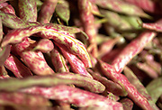 Close up selective focus photograph of a bunch of Cranberry Beans