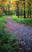 Fall color, ferns, walking road, Promised Land State Park, Pennsylvania