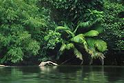 Rain forest, Skrang River, Borneo, Malaysia
