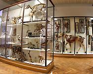 Musee Fragonard, the veterinary museum of Paris,