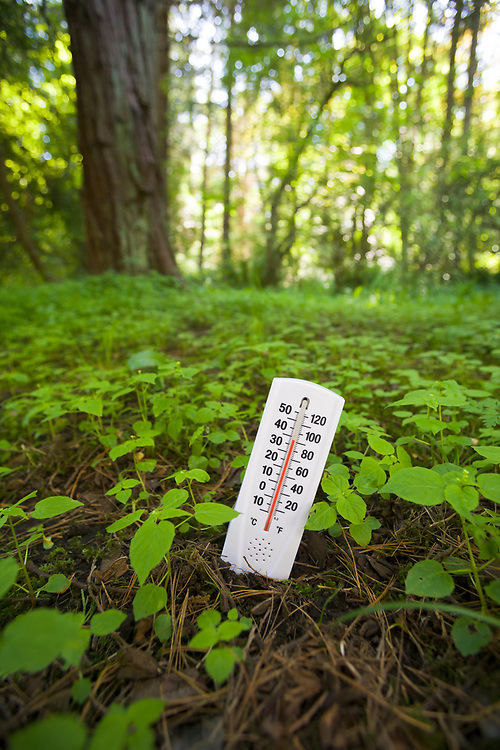 A conceptual image of a thermometer stuck in the ground showing a high temperature illustrating global climate change / global warming.