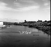 River Suir at Clonmel, Co Tipperary.02/04/1957
