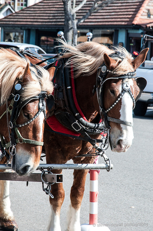 California Central Coast Clydesdale Horses