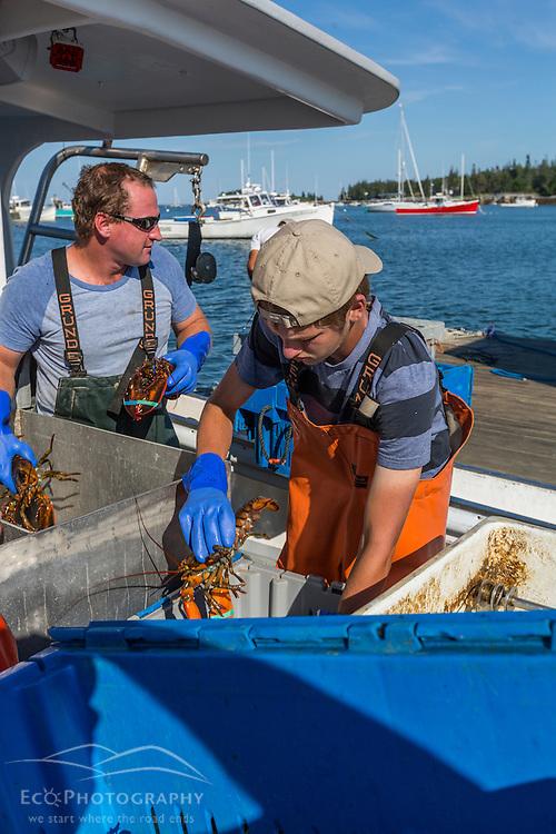 Captain Ivan Bly (left) and sternman Austin Jones sorting lobsters aboard 'Iris-Irene,' at the Tenants Harbor Fisherman's Coop in Tenants Harbor, Maine.