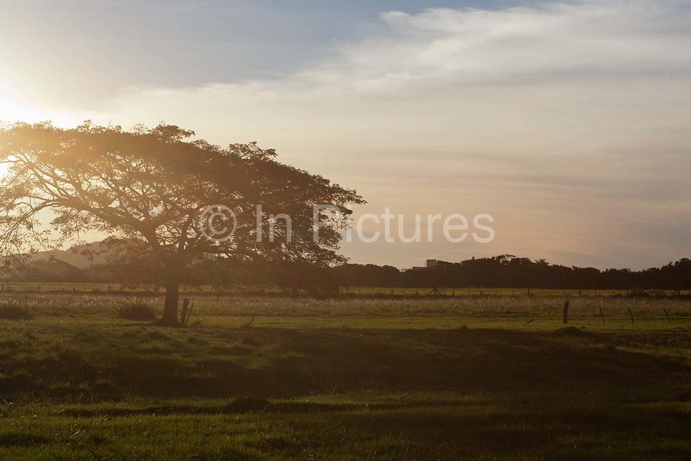 Sunset afternoon starburst light tree in field, golden. Working Gaucho Fazenda in Rio Grande do Sul, Brazil.