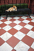 A cat on the front entry of the Calhoun Mansion on Meeting Street in Charleston, SC. Charleston founded in 1670 is considered America's most beautifully preserved architectural and historic city.