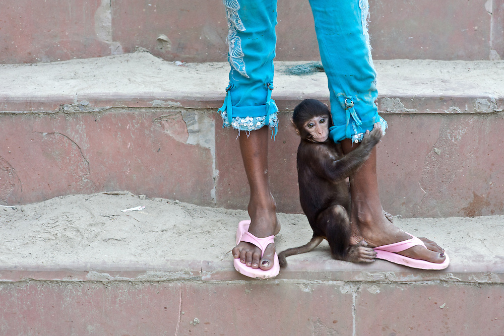 A monkey clings to a young girls legs along the ghats in Varanasi, India