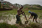 Rohingya men work a flooded field next to the Chakmakul refugee camp that shelters a part of the over 800,000 Rohingya refugees, in Cox's Bazar, Bangladesh, June 24, 2018. With an estimated 2500mm of rain due to fall over the next few months, entire parts of the camp are at risk of flooding.
