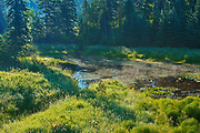 Wetland in morning light<br />Kenora<br />Ontario<br />Canada