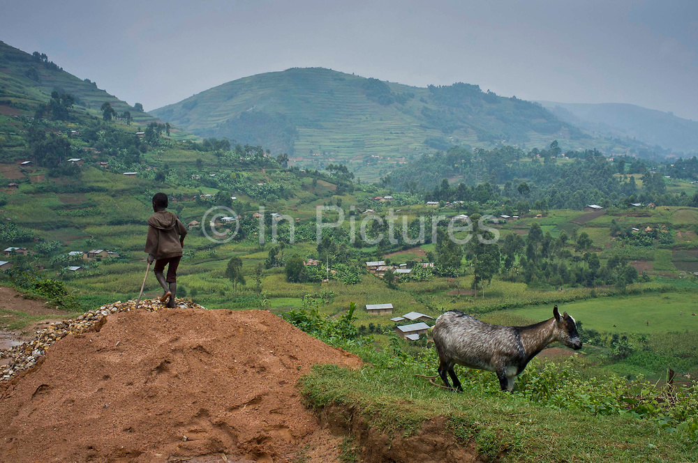 A boy from the Buhoma village in Uganda watches over his goats.