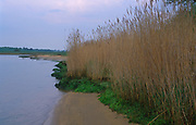 AF5GMD Reeds beds River Deben near Ramsholt Suffolk England