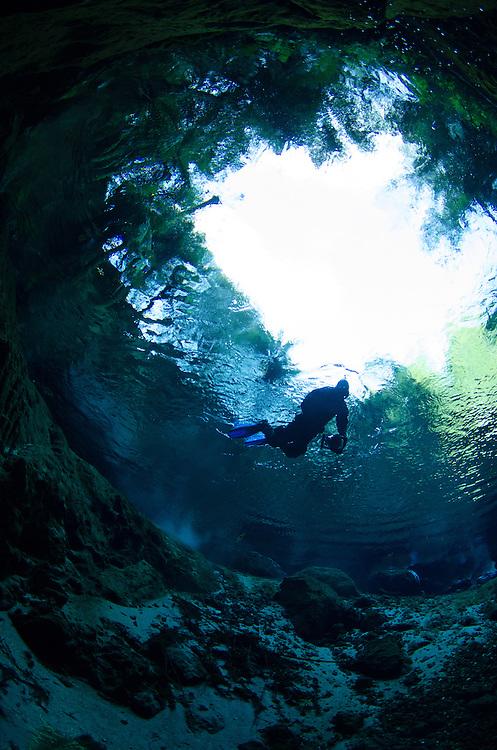 Blue Spring, Te Waihou