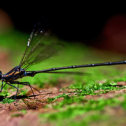 Insect Macro Photography by Jaydon Cabe, taken at various locations though out Australia