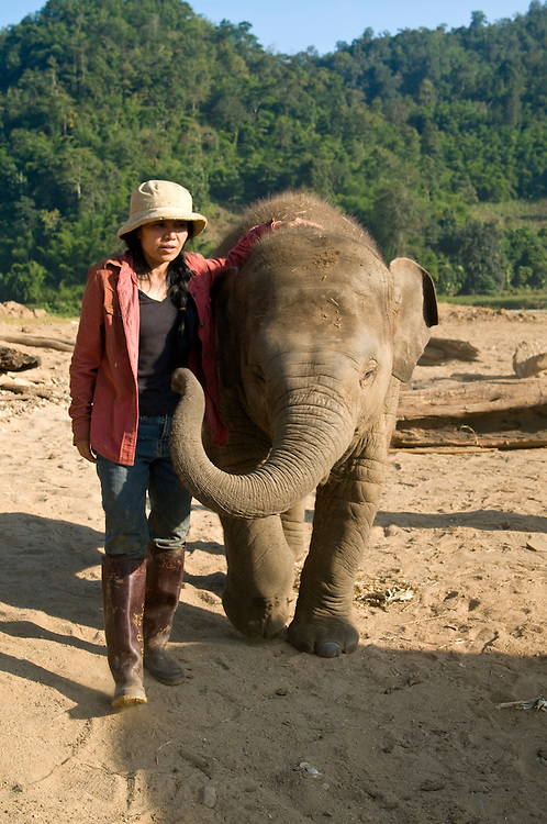 """Sangduen """"Lek"""" Chailert with baby boy Chang Yim (Smiling Elephant) at the Elephant Nature Park near Chiang Mai, Thailand.  Sangduen """"Lek"""" Chailert founded the park as a sanctuary and rescue centre for elephants.  The park currently has 32 elephants sponsored and supported by volunteers from all over the world."""