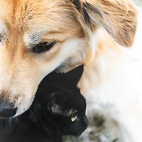 Pet Photography by Connie Roberts Photography