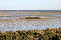 Low tide on a Springe tide below the mangroves in Broome's Roebuck Bay.