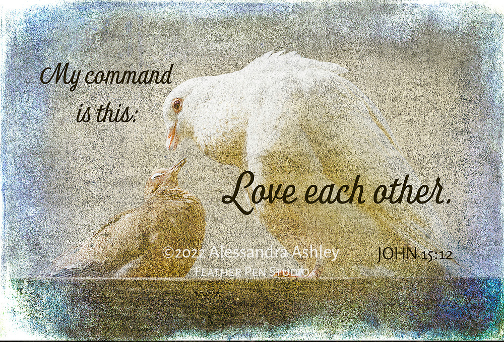 White dove and mourning dove pair, beak to beak in affectionate pose. Composite with watercolor texture and frame.