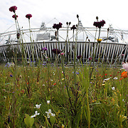 Wildflower meadows are taking shape around the Olympic Stadium as final preparations for the games continue. The riverbank meadows of bee-friendly cornflowers, marigolds, Californian poppies and prairie flowers have been especially designed to flower late by international wildflower expert Professor Nigel Dunnett from the University of Sheffield. London 2012 Olympic games, Olympic Park, Stratford, UK. 15th July 2012. Photo Tim Clayton