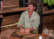 man rolls a cigar. Viñales Valley, (Vinales) Cuba