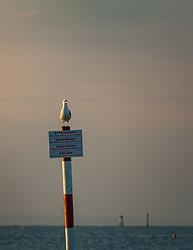 THEMENBILD - eine Möwe auf einem Hinweisschild am Strand in der Morgensonne, aufgenommen am 16. Juni 2018, Lignano Sabbiadoro, Österreich // a seagull on a sign on the beach in the morning sun on 2018/06/16, Lignano Sabbiadoro, Austria. EXPA Pictures © 2018, PhotoCredit: EXPA/ Stefanie Oberhauser