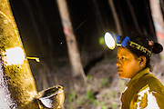 """15 DECEMBER 2014 - CHUM SAENG, RAYONG, THAILAND: A laborer on a large rubber plantation in eastern Thailand, taps a rubber tree. Rubber trees are tapped at night and the latex collected from the base of each tree in the morning. Thailand is the second leading rubber exporter in the world. In the last two years, the price paid to rubber farmers has plunged from approximately 190 Baht per kilo (about $6.10 US) to 45 Baht per kilo (about $1.20 US). It costs about 65 Baht per kilo to produce rubber ($2.05 US). Prices have plunged 5 percent since September, when rubber was about 52Baht per kilo. Some rubber farmers have taken jobs in the construction trade or in Bangkok to provide for their families during the slump. The Thai government recently announced a """"Rubber Fund"""" to assist small farm owners but said prices won't rebound until production is cut and world demand for rubber picks up.        PHOTO BY JACK KURTZ"""