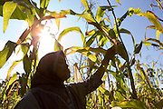 Siti Rofi'ah, 45, inspects the maize plants in her demonstration plot in Merdeka, Lebatukan subdistrict, Lembata district, East Nusa Tenggara province, Indonesia.
