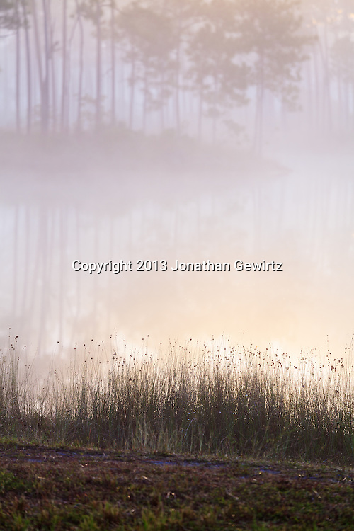 Morning fog on the pond at Long Pine Key in Everglades National Park, Florida. WATERMARKS WILL NOT APPEAR ON PRINTS OR LICENSED IMAGES.