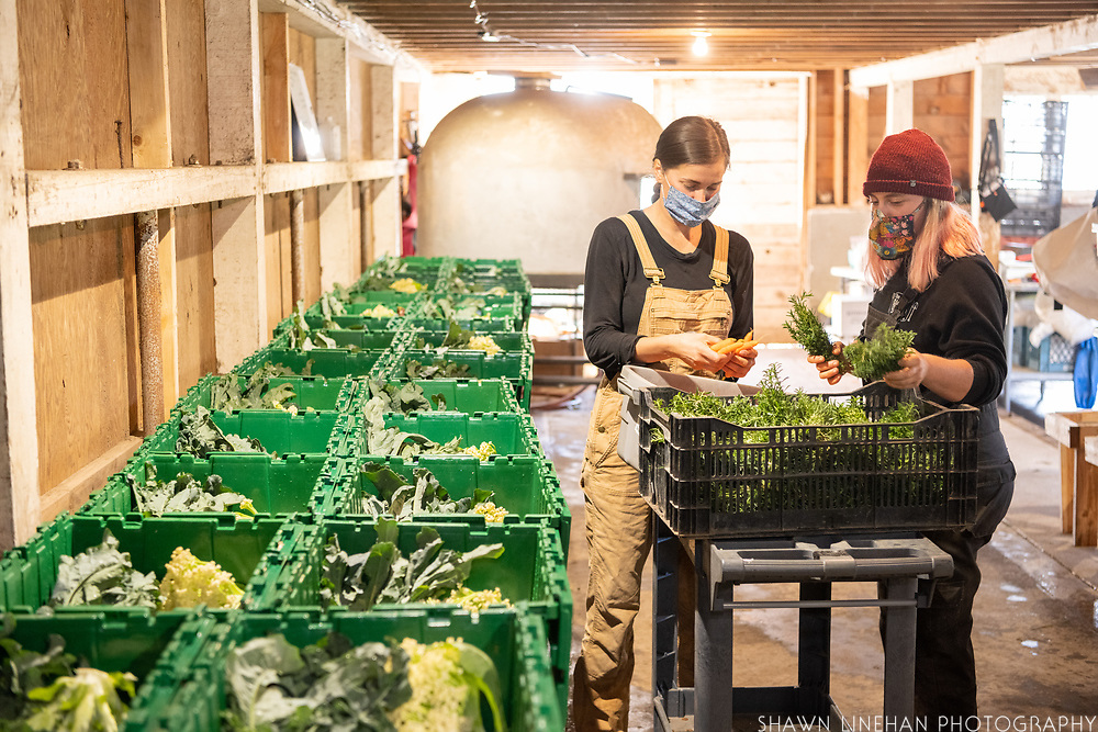 Jamie and Jessica packing boxes at Wild Roots Farm