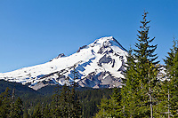 Mt Hood on a sunny day with trees in the foreground