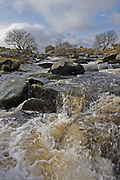 Fast flowing upland river tumbling over rocky bed in Dartmoor National Park