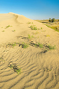 Ripples, sand dunes and vegetation<br /> Great Sand Hills<br /> Saskatchewan<br /> Canada