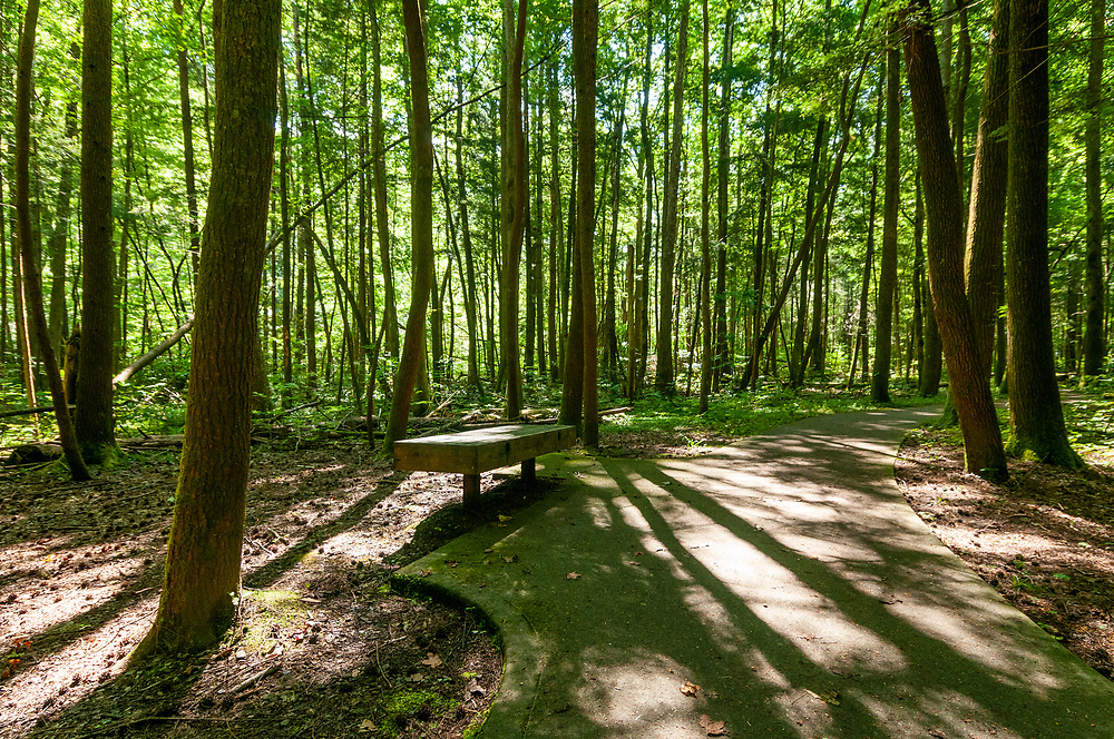 A bench in the woods along the Sugarlands Valley Nature Trail in Great Smoky Mountains National Park in Gatlinburg, Tennessee on Thursday, August 13, 2020. Copyright 2020 Jason Barnette