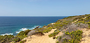 Sandy cliff top path through flowering plants, coastal landscape on the Rota Vicentina Fisherman's Trail long distance footpath route, near Bunheira, Aljezur, Algarve, Portugal, Southern Europe