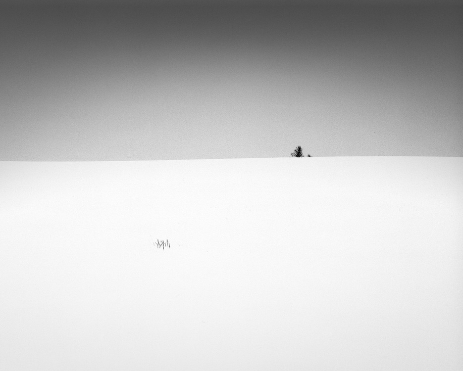 A distant tree and some grass sticking out of a perfect snow covered field