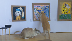 """An art-loving couple who are self-isolating in London have created a miniature art gallery for their pet gerbils.<br /> <br /> 9-month-old brothers Pandoro and Tiramisù were met with a special surprise when their owners Filippo Lorenzin, an independent curator who works at London's Victoria and Albert Museum, and his girlfriend, artist Marianna Benetti, unveiled a DIY miniature museum - the product of four hours of labour during the couple's 14th day of quarantine.<br /> <br /> The little gallery features four exquisite paintings modelled on famous masterpieces.<br /> <br /> Versions of Leonardo da Vinci's Mona Lisa, Edvard Munch's The Scream and Gustav Klimt's The Kiss, all rendered in Benetti's expert hand, grace the museum's walls.<br /> <br /> Each, of course, comes with its own animalistic twist, subbing in a rodent where a human might otherwise feature - tailored, perhaps, to the VIP pint-sized patrons.<br /> <br /> Johannes Vermeer's The Girl With the Pearl Earring, for instance, is re-imagined as The Gerbil With the Pearl Earring.<br /> <br /> Each parody is finished off with a clean cardboard frame and a wall label featuring a QR code.<br /> <br /> Speaking to Bored Panda, Filippo said: """"We visit museums and galleries whenever we can. We are interested in the artworks as much as in the way these are displayed.<br /> <br /> """"Are the QR codes to engage the public working? How comfortable are the gallery stools? Is there any audio guide? etc.<br /> <br /> """"When Marianna suggested to make a sort of doll house for our beloved gerbils as pastime for a lazy Sunday spent locked at home, I suggested to make a small art gallery. She is very good at painting and it was a nice opportunity to keep us busy with a fun project.""""<br /> <br /> According to Filippo, the gerbils love the gallery.<br /> <br /> """"They seemed interested in everything but the paintings, which made us laugh,"""" he said.<br /> <br /> """"They explored the space interacting with the stool, the signs and th"""